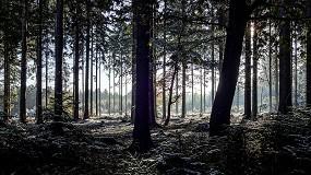 Foto de Simpósio debate doença da murchidão dos pinheiros