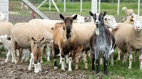 Foto de La EFSA analiza los procedimientos de control contra la viruela ovina y caprina