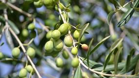 Foto de Demo Olivo 2021: olivicultura do futuro em debate
