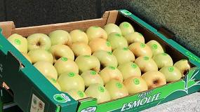 Foto de Vai nascer uma nova plataforma online de promoção da maçã Bravo de Esmolfe