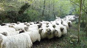 Foto de El Gobierno Vasco destina 12 millones de euros de ayudas a la ganadería por la COVID-19