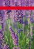 Productos Batlle: semillas aromáticas
