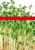 Productos Batlle: semillas para brotes
