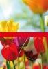 Productos Batlle: bulbos de flor