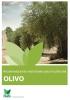 Recomendaciones nutricionales para el cultivo del olivo