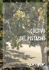 Diptico pistacho version