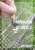 Semilleros cebolla