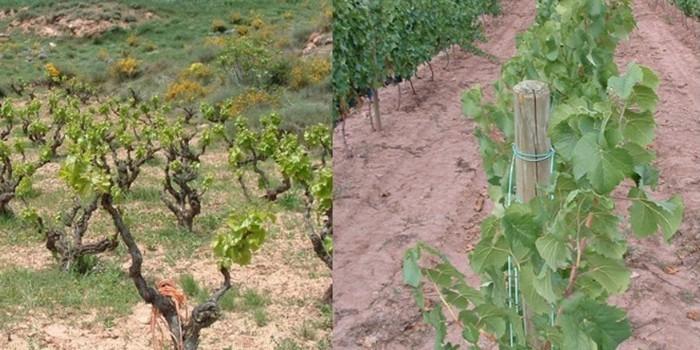 Reflexiones sobre la evolución de la viticultura en los últimos 30 años