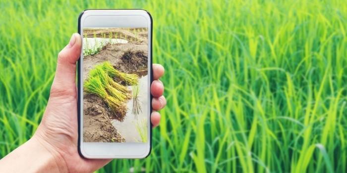 Agrointeligencia al servicio del agricultor