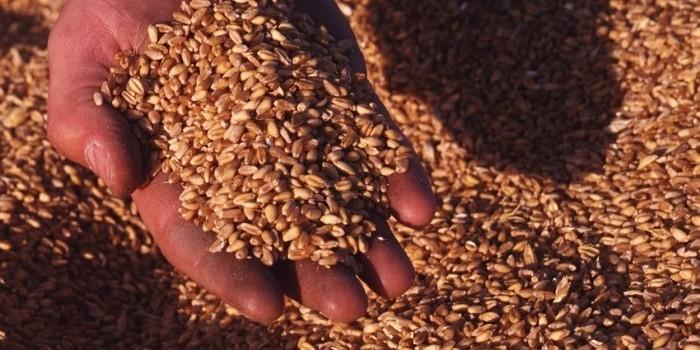 El interés especulativo mundial por las materias primas agrarias impide divisar el techo del mercado