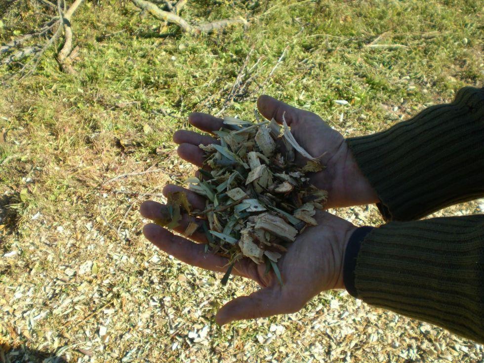 Trituradora de ramas