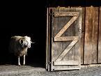 """""""ZZ"""" - Accésit otorgado por la empresa DEHEUS"""