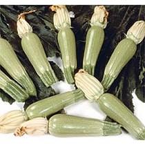 Semillas de calabacín blanco