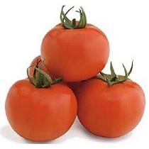 Semillas de tomate de calibre grueso