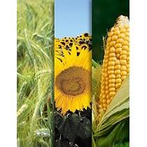 Soluciones informáticas para cultivos extensivos