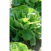 Soluciones informáticas para horticultura