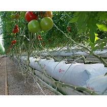 Bolsas para cultivo Hidrop�nico Sera
