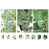 Fungicidas para vi�a Collis