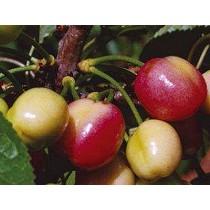 Bioactivadores del az�car para los frutos Abonos Try Gluco