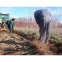 Servicios agrícolas, forestales y asesoría técnica ambiental