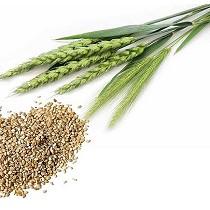 Herbicida para el cereal
