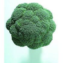 Semillas de brócoli