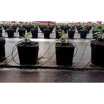 Macetas para cultivo hidropónico