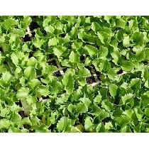 Sustratos para semillero