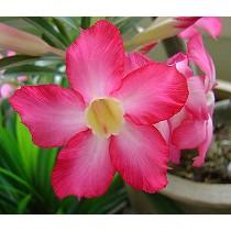 Sustratos profesionales para planta de primavera
