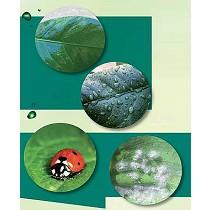 Fungicida e insecticida a base de aceite de naranja