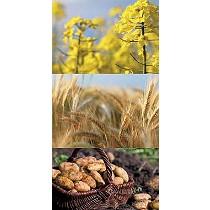 Fungicida a base de azoxistrobin autorizado en cereal, colza y patata