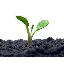 Abono ecológico potenciador de fertilizantes convencionales Amino Protein A