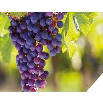 Fungicidas para viñas Zorvec Vinabria