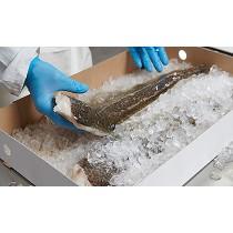 Envases de cartón rígido para pescado