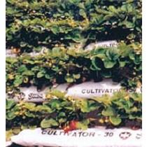 Saco de cultivo