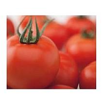 Semillas de Tomates