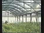 ININSA, fabricante e instalador de invernaderos