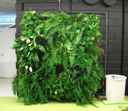 Jardines verticales de bajo consumo de agua jardiner a for Jardin vertical materiales