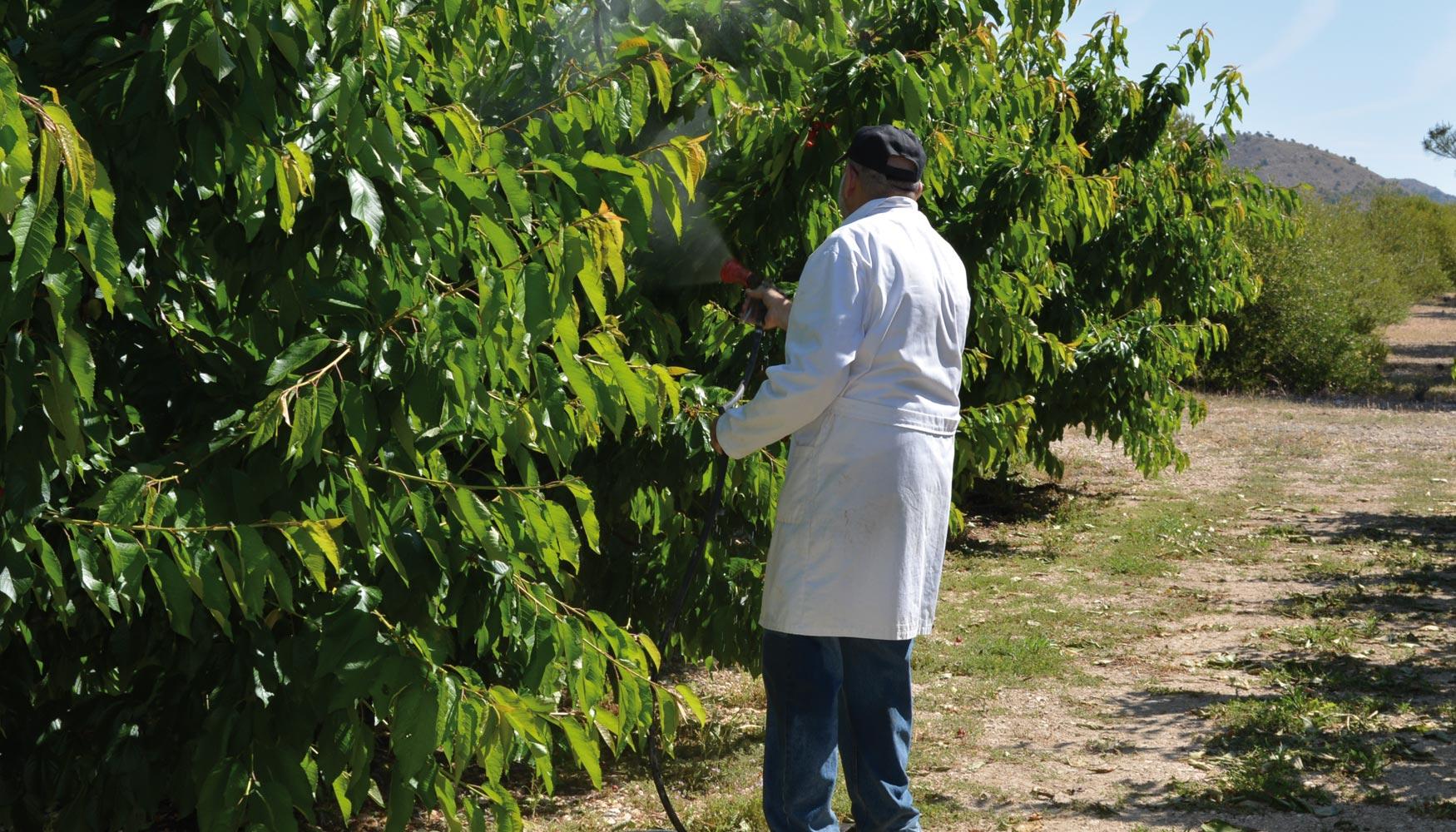 plantas que tienen acido salicilico