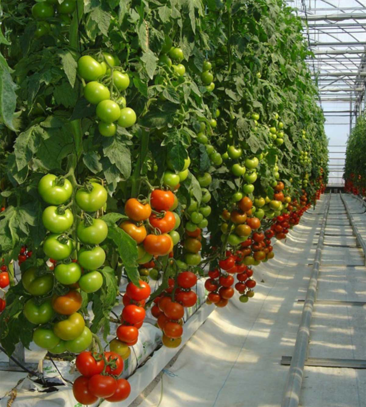 La climatizaci n de invernaderos en el sureste de espa a for Viveros del sureste