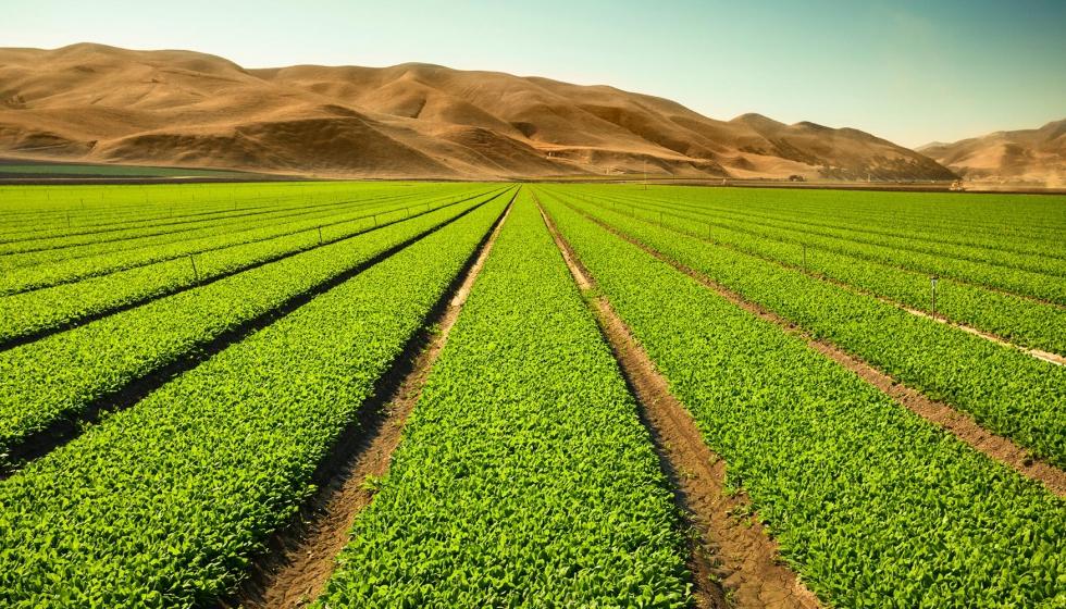 La agricultura de conservación puede contribuir a reducir ...