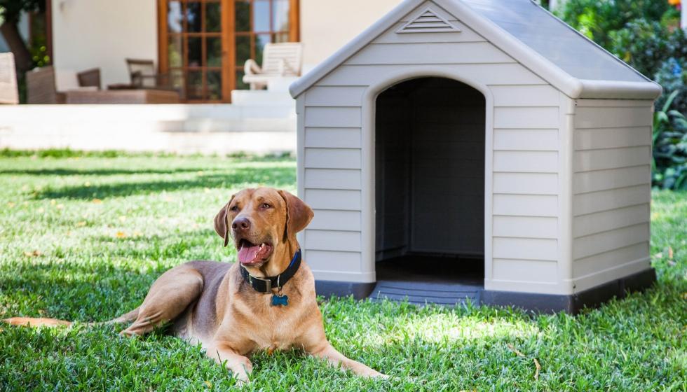 Keter presenta una caseta de perro para interior o exterior - Ferretería