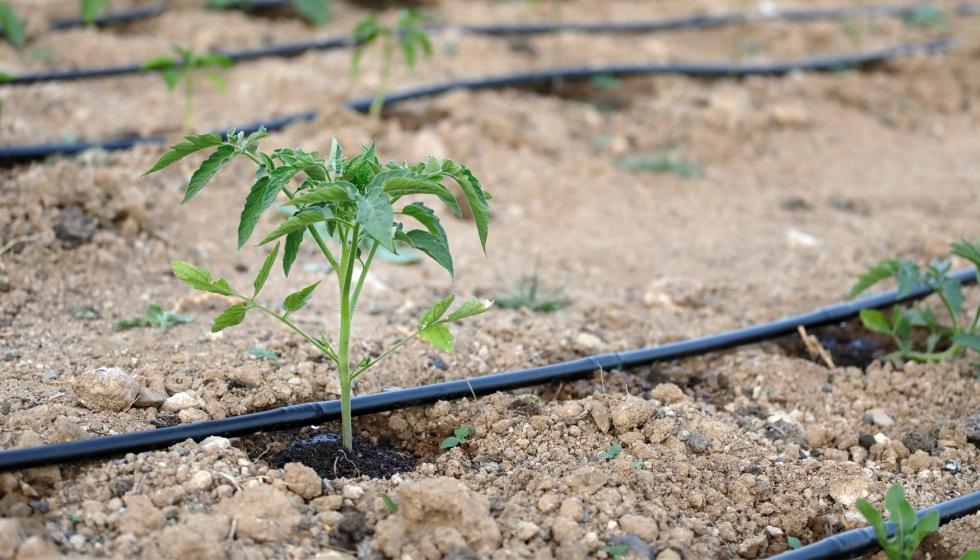 Manejo sostenible del riego en el rea mediterr nea for Horticultura definicion