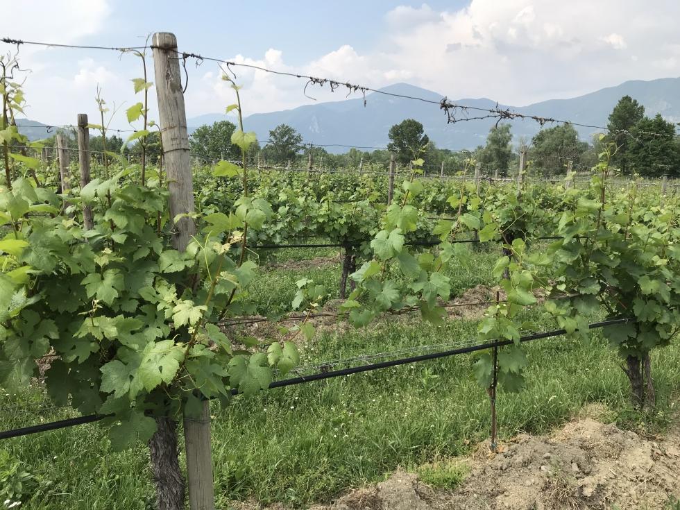 Maquinaria específica para el cultivo del viñedo en espaldera ...