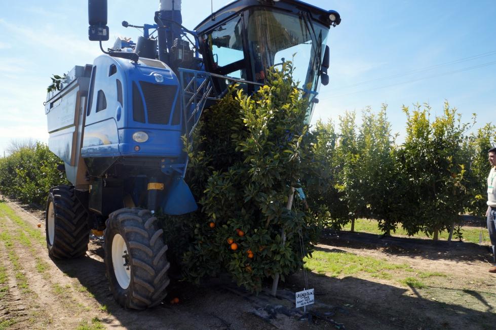 La Importancia De La Mecanización En La Citricultura Horticultura