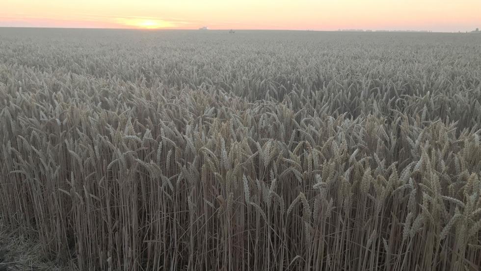 fotos de cereales y leguminosas