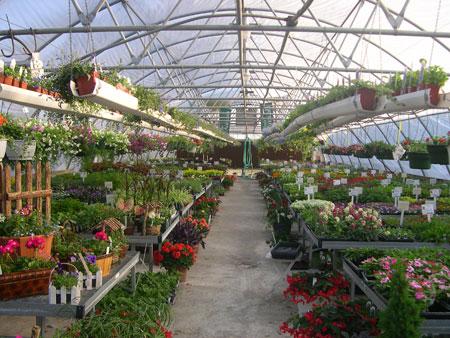 Los invernaderos del siglo xxi pl stico for Plantas que hay en un vivero
