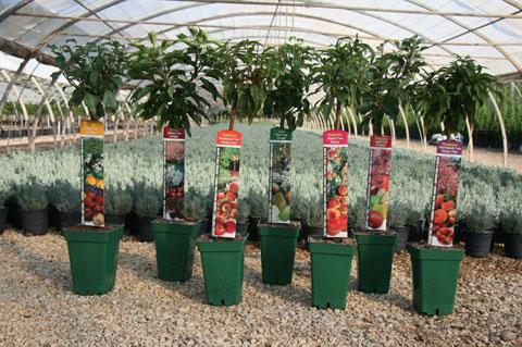Viveros ver n presenta peque os frutales para terrazas for Plantas frutales