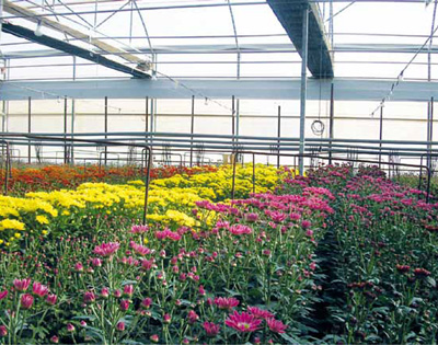 Los cultivos ornamentales en el mediterr neo espa ol for Produccion de plantas ornamentales