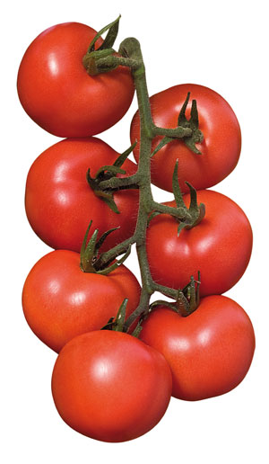 Alterio, Bigram and Byelsa, the varieties of tomato seeds